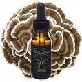 Turkey Tail Spagyric Tincture - 15ml (Feral Fungi)