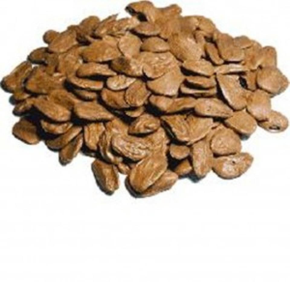 akuamma seed phytoextractum