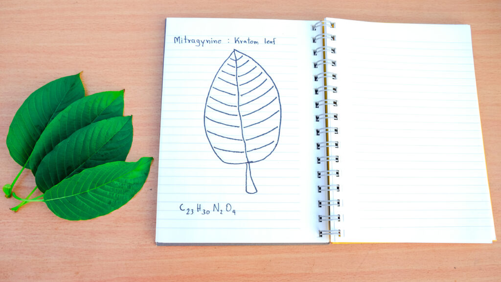 kratom leaf notebook