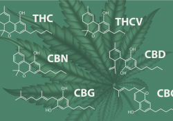 cannabinoid chemical structure