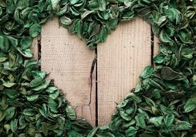 kratom leaves heart