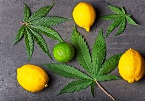 cannabis leaves, lemons, limes